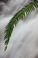 Fern Frond in front of waterfall
